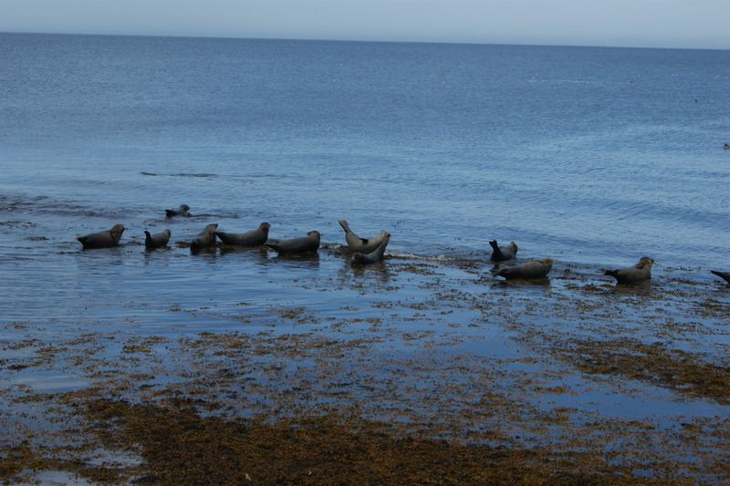 4 Portgordon Seal Colony.JPG