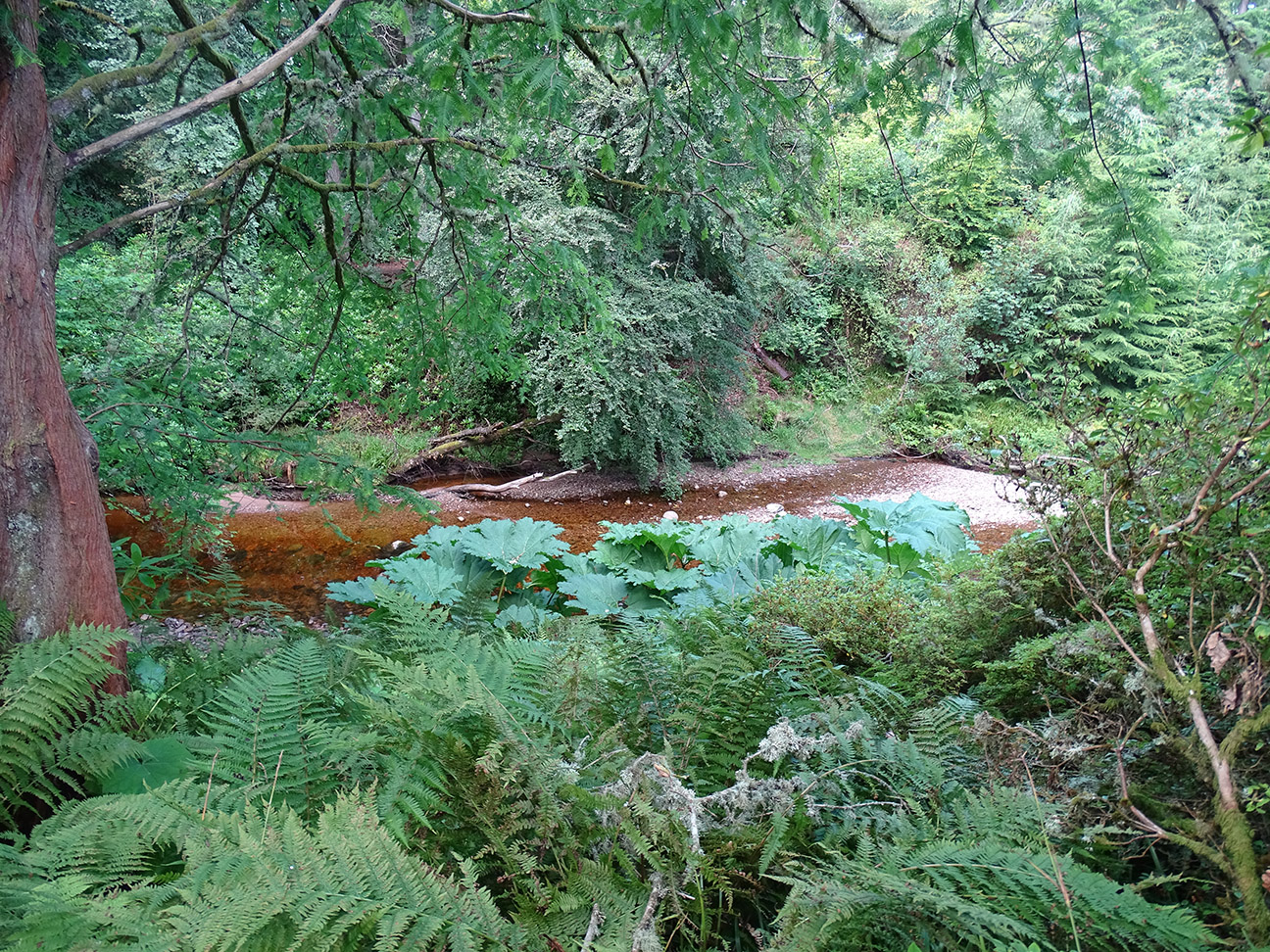 8 the Cawdor Burn.jpg